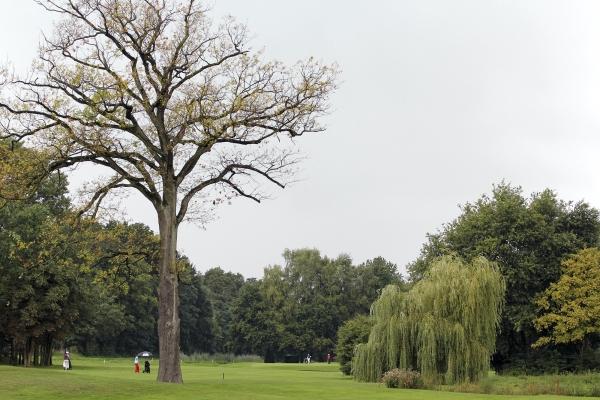 Golf & InternetPsyche einsAnholt_Weide