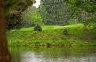 Wasser und Tierspuren beim Golf